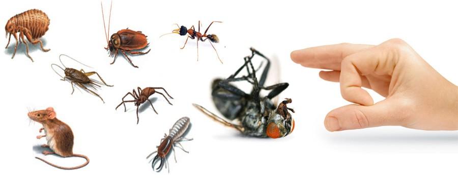 Servo Pest Control Services in Dubai, UAE