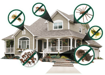 Residential rodent control in Dubai