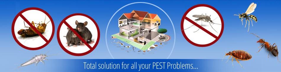 Pest Control in Dubai | Book Pest Control Services Online