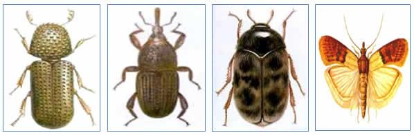 Fumigation Services in Dubai - Bed Bug Fumigation Provider in Dubai