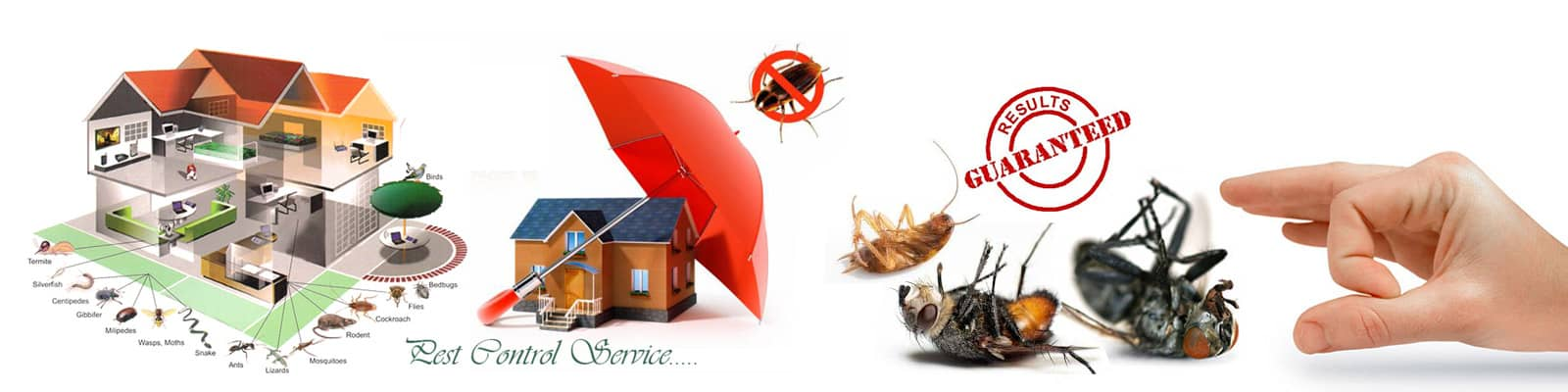 Local Certified Pest Experts Providing Fast, Safe and Effective Pest Control