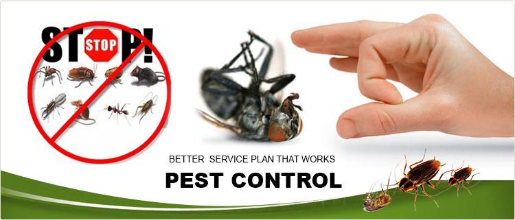 Providing Fast, Safe and Effective Pest Control in Dubai