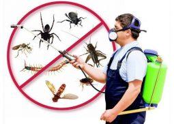 Dubai Pest Control & Extermination Services
