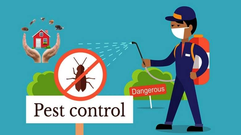 Common pests in UAE and their Solutions/Services